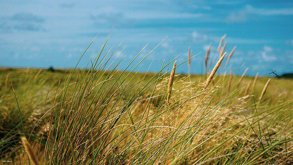 Reeds, Plants, Grass, Sea, Coast, Water, Nature