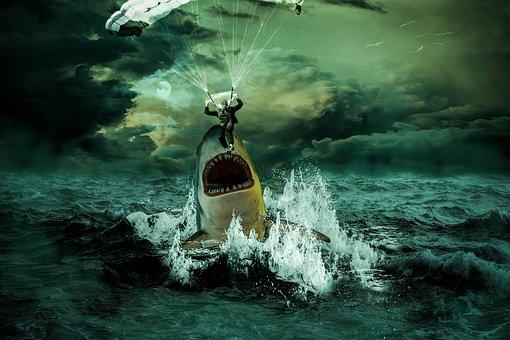 Sea, Ocean, Shark, Water, Glider, Forward, Waves