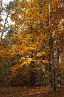 Uckermark, Forest, Autumn, Fall Foliage, Woods