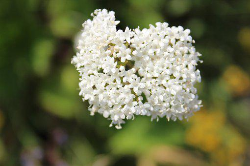 Flowers, White Flowers, Bunch, A Bunch Of White Flowers