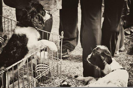 Puppy, Dog, Goat, Pets, Animals, Cute, Black And White
