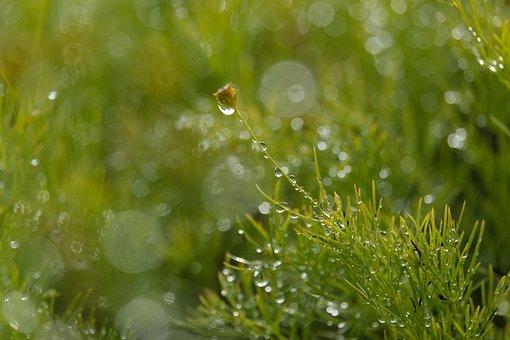 Dewy, Raindrops, Grass, Flowers, Dew, Droplets, Bokeh