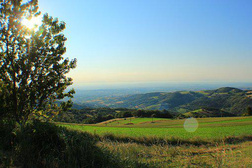 Landscape, Meadow, Field, Grassland, Pasture, Tree