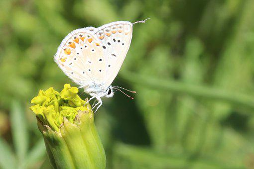 Butterfly, Insect, Flower Bud, Plant, Flowering Plant