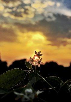 Flowers, Backlighting, Sunset, Leaves, Plants, Nature