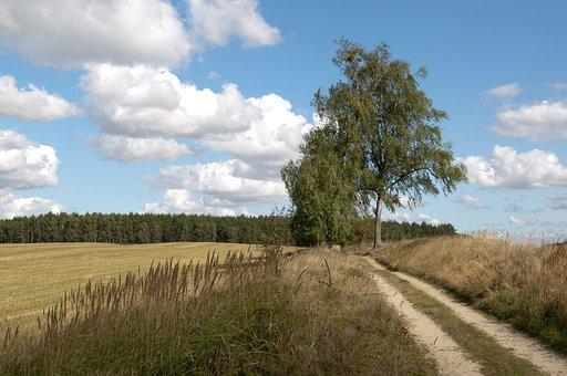 Field, Meadow, Grass, Trail, Path, Pathway, Rural