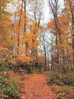 Nature, Forest, Autumn, Path, Passage, Pathway, Walkway