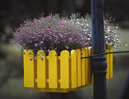 Flowers, Plant Box, Plant, Blossom, Bloom