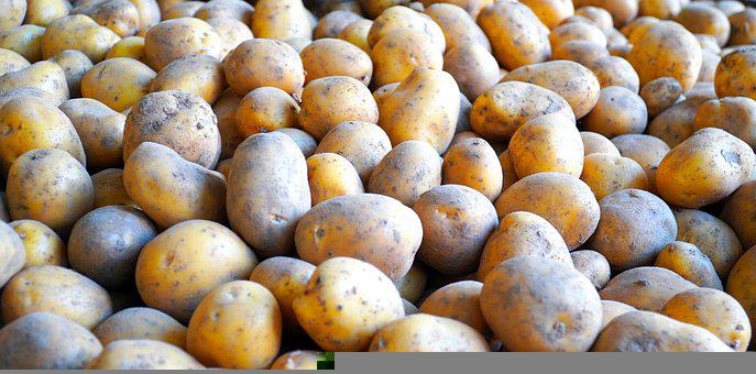 Potatoes, Vegetable, Harvest, Produce, Raw
