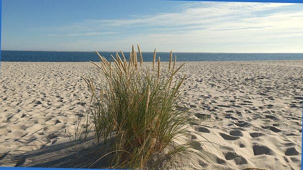 Beach, Sand, Grass, Beachgrass, Marram Grass