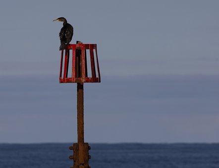 Cormorant, Tide Marker, Sea, Ocean, Water, Sea Marker