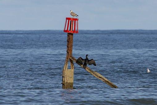 Birds, Tide Marker, Sea, Ocean, Water, Sea Marker