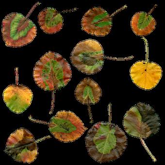 Autumn, Leaves, Autumn Leaves, Foliage, Red, Color
