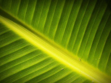 Leaf, Background, Lines, Foliage, Photosynthesis