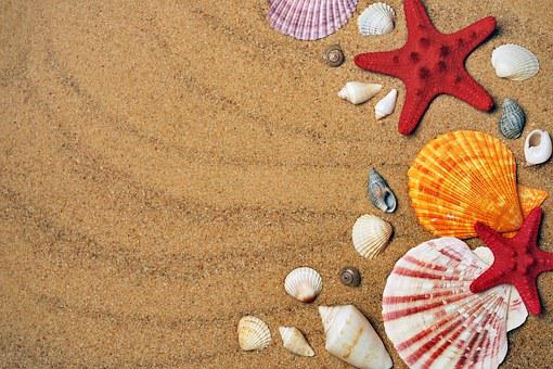 Sea, Sand, Coast, Beach, Seashells, Vacation, Nature