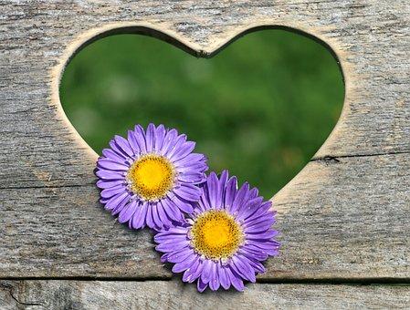 Heart, Flowers, Astra, Two, Boards, Window, Love