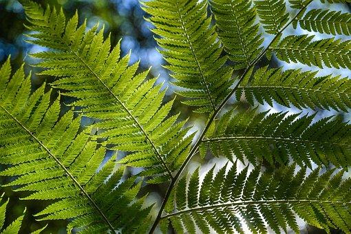 Tree Fern, Rainforest, Foliage, Tropical, Green, Lush