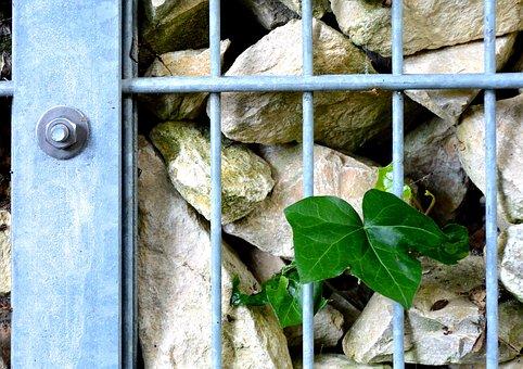 Grid, Stones, Leaf, Gabion, Wall, Garden