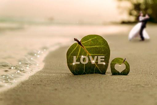 Coast, Leaf, Water, Wave, Sea, Beach, Sha, Couples