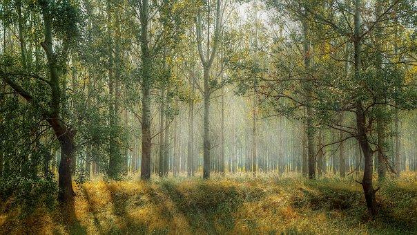 Green, Park, Season, Nature, Outdoor, Green Background