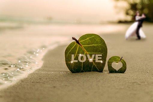 Coast, Leaf, Water, Wave, Sea, Beach, Sha, Couples