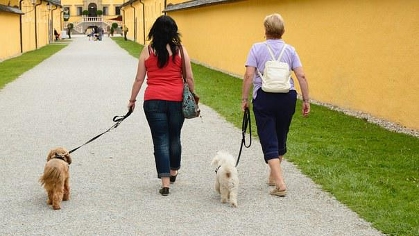 Women, Personal, Walk, Go Walkies, Go, Human, Dog
