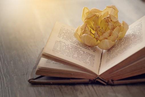 Book, Font, Old, Book Pages, Old Book, Flower, Blossom