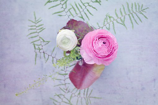 Ranunculus, Pink, White, Flowers, Bouquet, From Above
