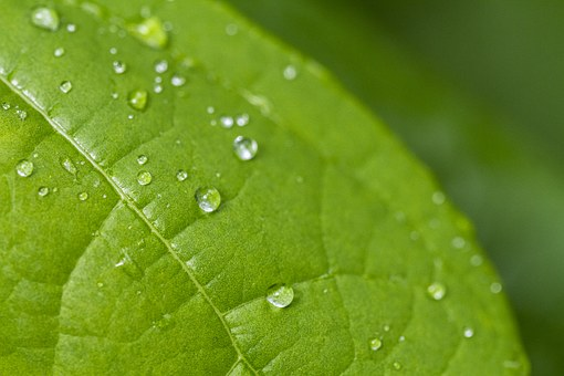 Life, Beauty, Scene, Leaf, Drops, Rain, Drip