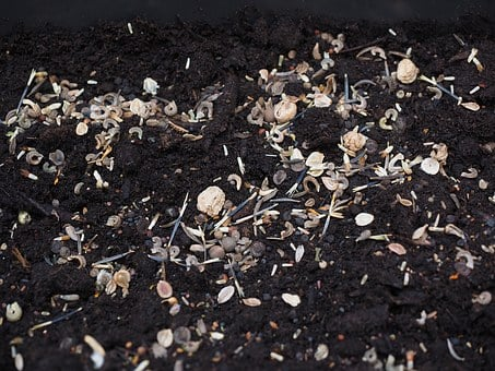 Flower Seeds, Seed, Sowing, Seeds, Grow, Growth, Nature