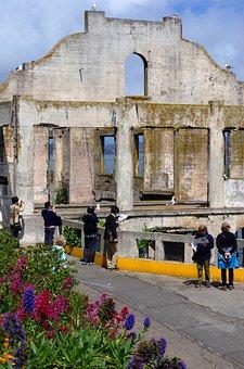 Alcatraz, Bird, Island, Prison, Ocean, Tourism, San