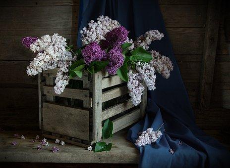 Still Life, Lilac, Shadow, Box, Flowers