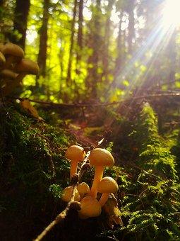 Mushroom, Nature, Forest, Autumn, Fungi, Colorful