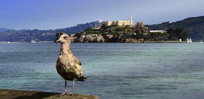 Alcatraz, Bird, Island, Prison, Seagull, Ocean, Tourism