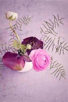 Flower, Ranunculus, Pink, Blossom, Bloom, Pink Flower