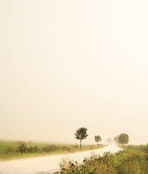 Rain, Landscape, Path, Trees, Dull, Gray