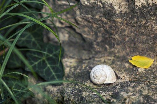 Snail, Shell, Nature, Animal, Slow, Spiral, Still Life