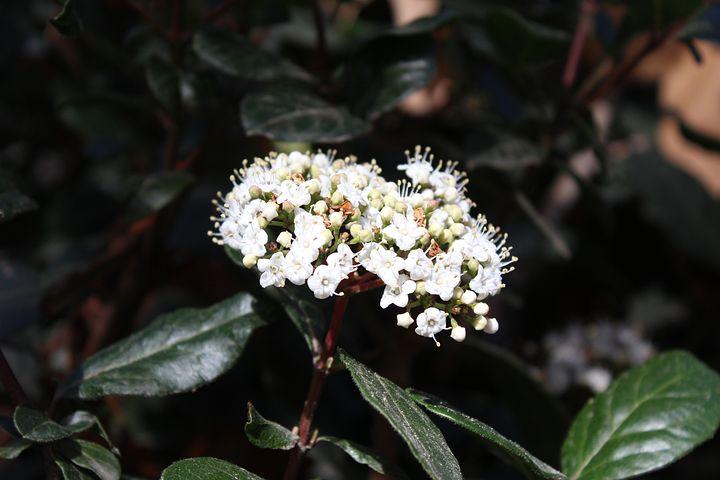 Flower, Park, Nature, Spring, Garden, Plant, Green