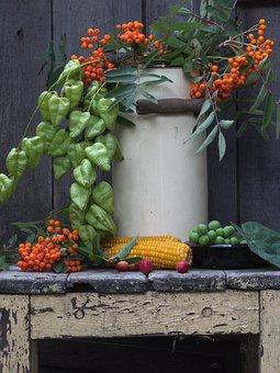 Still Life, Pot, Mountain Ash, Berries, Corn On The Cob