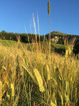 Barley, Fiss, Tyrol, Walk, Bread, Holiday, Sky, Summer