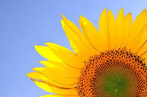 Hilarity, Life, Summer, Sunshine, Sunflower