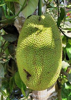 Thailand, Jackfruit, Jacques, Fruit, Tropical