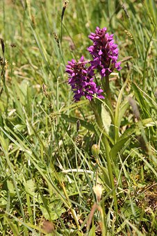 Orchid, Orchid In The Peat Soil, Two Orchid Flowers