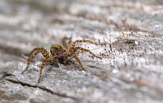 Spider, Small Spider, Arachnid, Arthropod, Animal