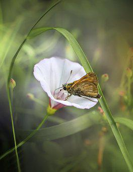 Butterfly, Insect, Wings, Antennae, Colorful, Flowers