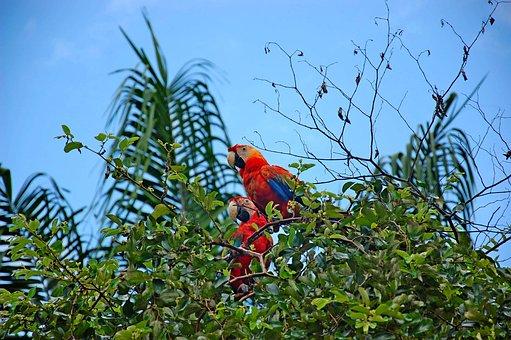 Parrots, Birds, Coockatoos, Exotic, Trees, Leaves