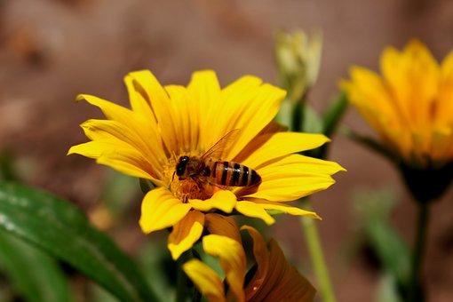 Flower, Bee, Pollination, Pollen, Blossom, Bloom