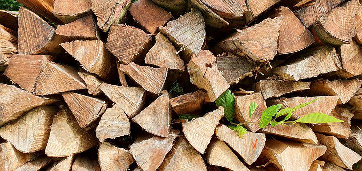 Forest, Wood, Trees, Pile, Firewood, Nature