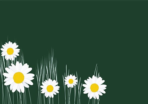 Background, Flowers, Daisy, Floral, Nature, Garden