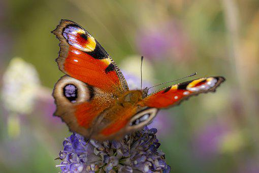 Pollination, Butterfly, Flower, Insect, Pollinator